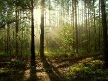 В лесу 2 / В лесу