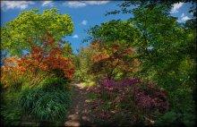 UK. RHS Garden Wisley / «Дикие» посадки азалий и рододендронов в садах Wisley Garden (в окрестностях города Woking, графство Surrey) под эгидой Королевского садоводческого общества (Royal Horticultural Society).  Cад Уизли – один из самых красивых садов в мире, созданный в 1979 году Джорджем Уилсоном. Сейчас сад Уизли занимает огромную площадь в 97 гектаров. Сад образован несколькими садами, парками и водоемами.  в 1878 году Джордж Уилсон - преуспевающий бизнесмен и увлеченный садовод, создал сад Уизли. В 1903 г. сад был передан Королевскому садоводческому обществу (RHS) в качестве экспериментального сада для научных и практических опытов в области садоводства. Уизли знаменит своей огромной коллекцией растений (более 30 тысяч видов и сортов). Это одна из крупнейших коллекций в мире. На территории Уизли разместились лучшие сады, получившие признание на выставках в Челси. Уизли не без основания считают школой ландшафтного искусства Великобритании. (подробнее см http://a360.ru/ru/content/geo/sight/730/)  Формат: HDR, вилка экспозиции - 3 кадра, 2 ряда по 8 позиций с перекрытием.