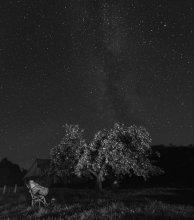 урожайный год / август, звёзды, яблоки, кадр с ежегодной летней школы