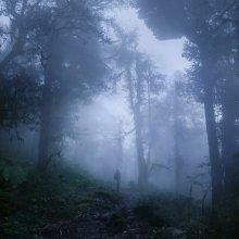 по следам ежика / в лесу