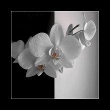Орхидея. (ч/б? ) / Орхидея. (ч/б? )