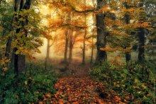 Следуй за светом... / Туманный лес - сказочное место. Кавказ.