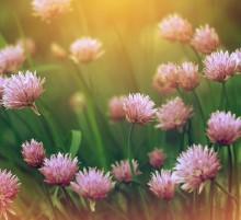 / цветочки