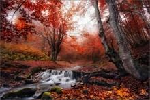 / Прелести поздней осени / / Закарпатье, октябрь 2013 г. http://FOTOTOUR.BY