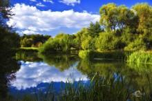 Летние краски / Лето. Берег реки. Окраина Минска.