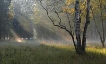 Осень в утреннем свете. / Лосиный остров.