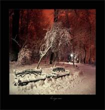 В зимнем парке / Львов, декабрь