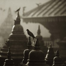 птицы / описание на картинке