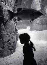 / Девочка и рыба