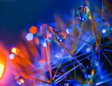 новогодняя / вода, кактус, гирлянда