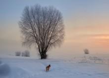 зимнее утро / .....