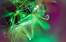 новогодняя2 / кактус, гирлянда, вода