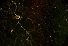 Нейрон / из серии геометрия пространства.