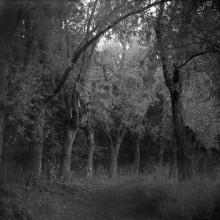Старая аллея. / Старая липовая аллея в Баболовском парке, г.Пушкин, Санкт-Петербург.