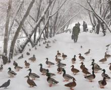 Утки , люди и снег / На парковой дорожке
