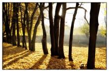 Вальс-бостон / осенние желтые листья в ярком свете