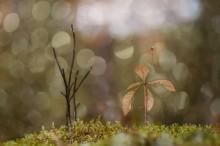 Чудовище и красавица / В лесу полным полно всякого интересного :)