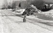 А из нашего окошка видна улица немножко / Улица в деревне
