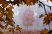 / Подглядывая за осенью.