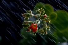 Май. Начало пути... / дождь, цветок