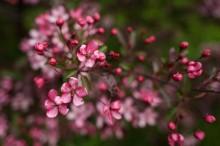 Цветут сады / *****