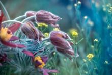 natural bouquet (Floral miniature) / natural bouquet (Floral miniature)