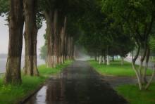 дождь / майская гроза