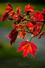 """S p r i n g _ p a n e l s / """"Весеннее панно"""" - май,  экзотические краски весны..)"""