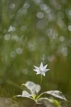 Волшебный цветок / Цветок