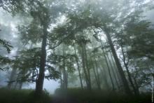 Таинственный лес / Кавказ. Россия