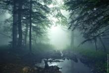Где-то далеко / В дремучем лесу...
