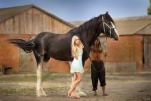 Эллео / королевский конь