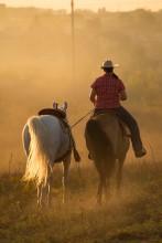 вестерн, закатное / Настоящие вестерн лошади в средней полосе России