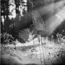 """# / """" in the morning Light """" Rolley_film Agfa Superpan-200 type120 (6x6sm) Belarusian_autumn_2014 ;)) Belsky_2014"""
