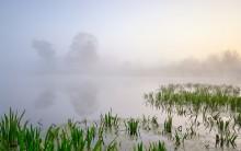/ туман река рассвет