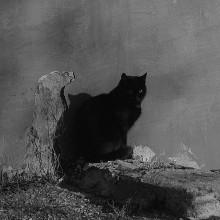 Ожидание / кот,стена,облупилась