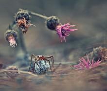 / добро пожаловать в мир паука