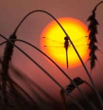 Свидание с Солнцем / Работа сделана на закате