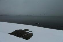 Иконография зимы / зима,море,снег,непогода,пейзаж,проталины
