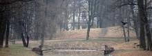 Осень в парке. / Konika VX 400