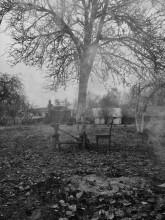 ноябрьское предзимье / ...последние листы с нагих ветвей...