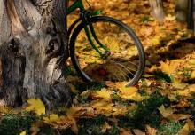 Старый велосипед / ... и старое дерево...