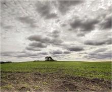 Полевая осенняя (4) / ........ из того же полевого вылаза.