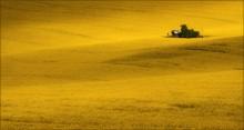 / Моравская рапсодия / / Целое море цветов .... -- Чехия, Южная Моравия.Весна 2014. http://fototour.by/south-moravia/