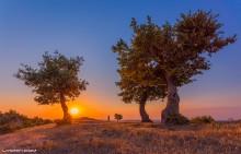 Утреннее сообщение / Фотография сделана в селе Герибляр Масаллинского района Азербайджана, где я летом отдыхал с друзьями. Рано утром я с другом пошли фотографировать рассвет. Когда я делал этот кадр, он писал сообщение на телефоне.