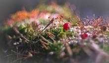 Мартовский мох / весна