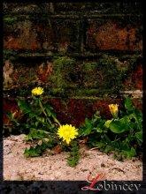 желтые / весна 2007