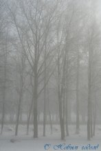 Зимний туман / С Новым годом!