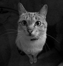 портрет скромной кошечки / все каты придурки , кроме кошки мурки! (с)