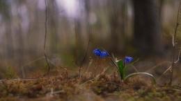 Первый дачный / весна